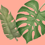 A palm leaf and a large banana leaf are seen in green on a peachy-pink colored background.