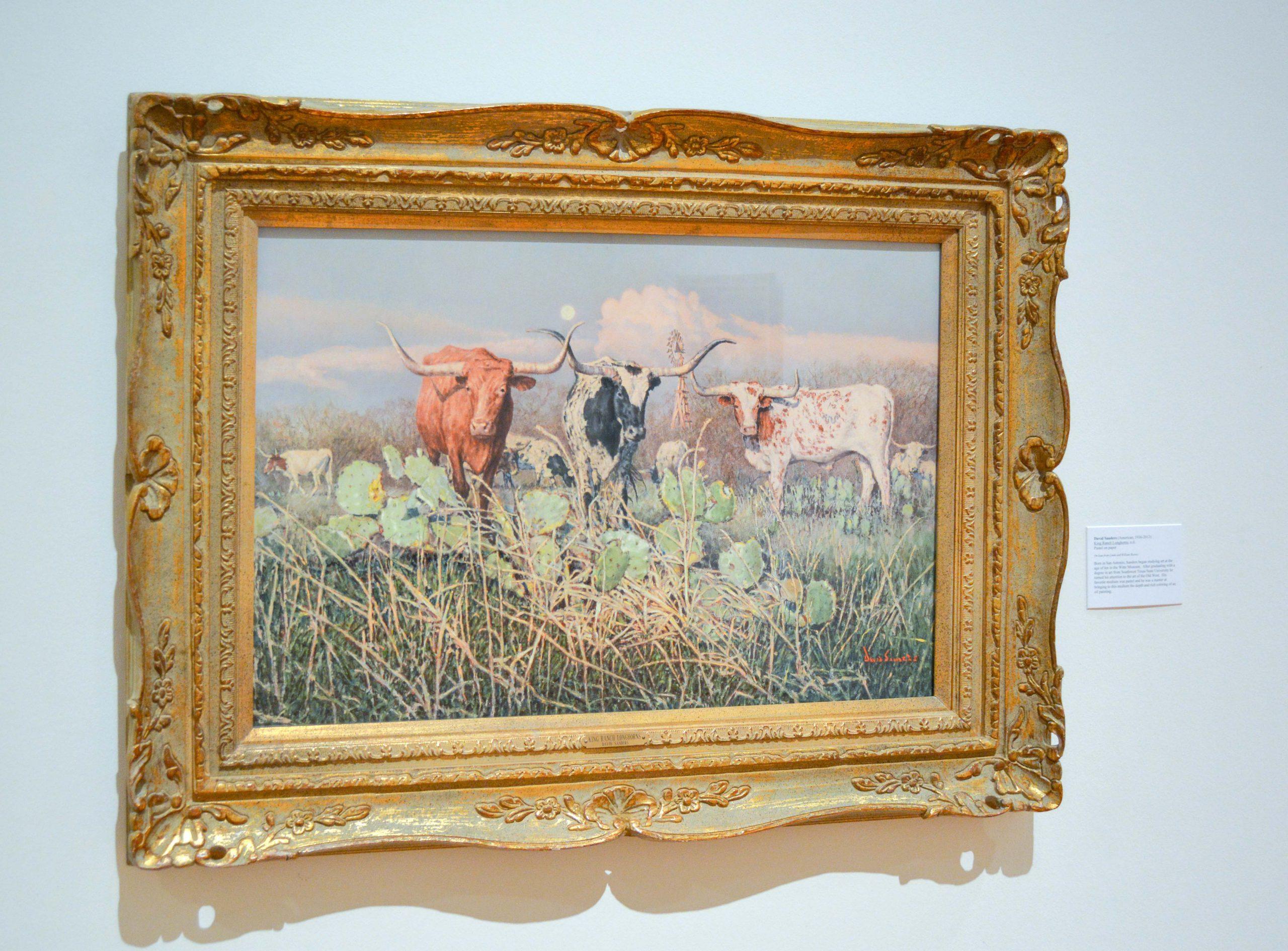 Longhorn cattle near cactus